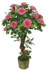 pohon mawar